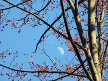 I hope there is spring on the moon. stock photography