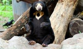 Ifrågasätta björnen Royaltyfri Fotografi