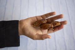 Ifthar kolacji Ramadan Karmowy kareem, pojęcie: Data Islamski zamocowanie, owoc data umieszczająca na białym tło różanu obraz royalty free