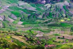 Ifugao Imagem de Stock Royalty Free