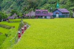 Ifugao ethnic minority in the Philippines stock photos