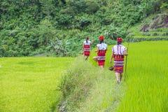 Ifugao-ethnische Minderheit in den Philippinen lizenzfreies stockfoto