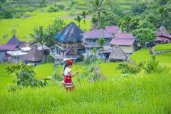 Ifugao etnisk minoritet i Filippinerna royaltyfri fotografi