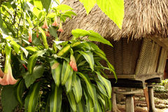 Ifugao hut tropical flowers philippines. Ifugao hut in batad northern luzon the philippines stock images