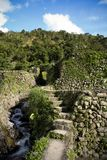Ifugao rice terraces banaue philippines. Stone walls and steep steps of the world heritage ifugao rice terraces in banaue northern philippines Royalty Free Stock Images