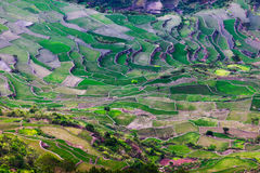 Ifugao Royalty Free Stock Image