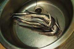 Igły ryba z wodą Fotografia Royalty Free