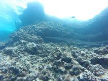 Igły Rybia rafa koralowa Fotografia Stock