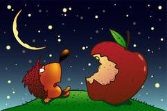 Igelkott och äpple Arkivbild