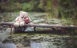 Igelkott och björn Arkivbilder