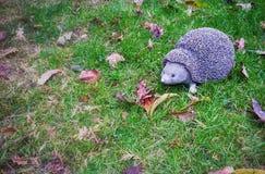 Igelkott på gräset Royaltyfri Foto