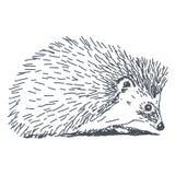 Igelkottteckning vektor illustrationer