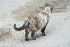 igen väg Gå för katt Royaltyfri Fotografi