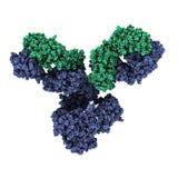 IgG1 monoclonal antilichaam (immunoglobulin). Spel essentiële rol i Stock Foto's