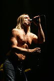 iggy pop Royaltyfria Foton