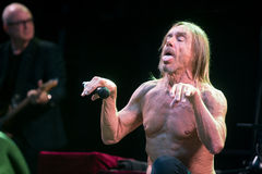 Iggy Pop Immagine Stock
