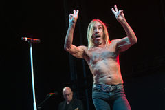 Iggy Pop Fotografia Stock