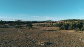 Iglaści drzewa i łąka blisko wzgórzy i lasu strzał Cudowny słoneczny dzień zdjęcie wideo