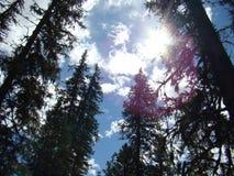 iglaści lasowi gór drogi drewna Słońca ` s promienie robią ich sposobowi przez gałąź obraz royalty free