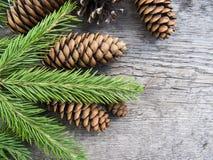 Iglaści drzewa na drewnianym tle Zdjęcie Stock