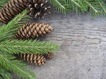 Iglaści drzewa na drewnianym tle Odgórny widok Zdjęcie Stock