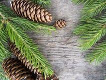 Iglaści drzewa na drewnianym tle Odgórny widok Obraz Royalty Free