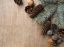 Iglaści drzewa na drewnianym tle Odgórny widok miejsce tekst Fotografia Royalty Free