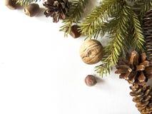 Iglaści drzewa, Odgórny widok miejsce tekst Zdjęcie Stock