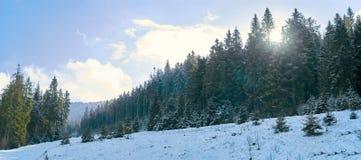 iglaści lasowi gór drogi drewna Obraz Royalty Free