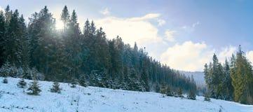 iglaści lasowi gór drogi drewna Zdjęcia Royalty Free