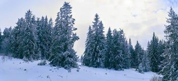 iglaści lasowi gór drogi drewna Zdjęcia Stock