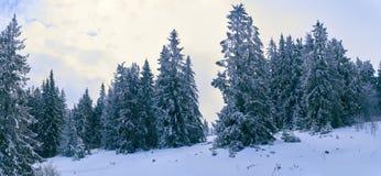 iglaści lasowi gór drogi drewna Zdjęcie Stock