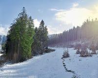 iglaści lasowi gór drogi drewna Obrazy Stock