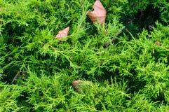 Iglastego drzewa dzień fotografia royalty free
