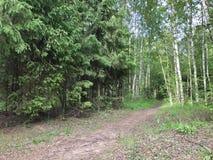 Iglasty i deciduous las z ścieżką zdjęcia stock