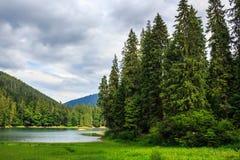Iglasty jeziorny brzeg w górach Obrazy Stock