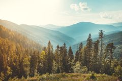 Iglasty las na Carpathians tle obraz stock