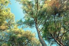 Iglasty las w Kaukaz, Krasnodar terytorium, Rosja Obraz Royalty Free