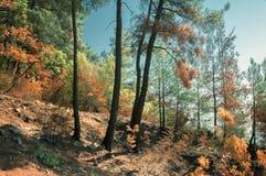 Iglasty las w Kaukaz, Krasnodar terytorium, Rosja Obrazy Royalty Free