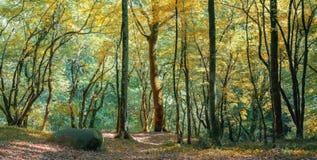 Iglasty las w Kaukaz, Krasnodar terytorium, Rosja Zdjęcie Stock