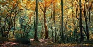 Iglasty las w Kaukaz, Krasnodar terytorium, Rosja Obrazy Stock