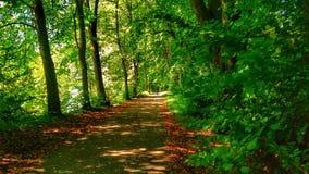 iglasty wschodniego Europe lasowej ścieżki Ukraine drewno Obrazy Royalty Free