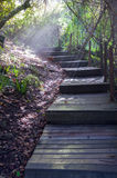 iglasty wschodniego Europe lasowej ścieżki Ukraine drewno Obraz Stock