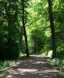 iglasty wschodniego Europe lasowej ścieżki Ukraine drewno Zdjęcie Stock