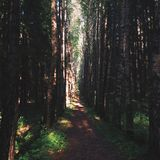 iglasty wschodniego Europe lasowej ścieżki Ukraine drewno Obrazy Stock