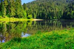 Iglasty wybrzeże rzeka w górach horisontal Obrazy Stock
