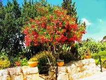 Iglesia de la transfiguración en el soporte Tabor en Israel Imagen de archivo libre de regalías