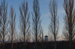 Iglesia en los árboles fotografía de archivo