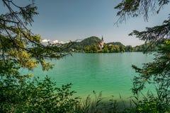 Iglesia en una pequeña isla en el lago sangrado, Eslovenia fotografía de archivo
