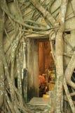 Iglesia rodeada por las raíces del árbol Fotografía de archivo libre de regalías